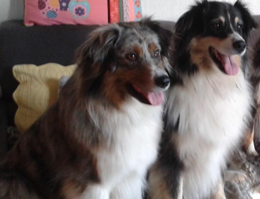 Horacio et Fatal chiens visiteurs